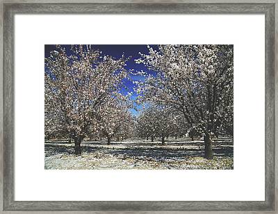 Framed Print featuring the photograph The Season Of Us by Laurie Search
