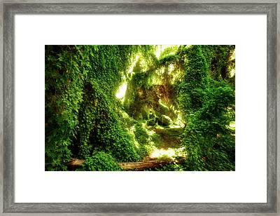 Framed Print featuring the photograph The Secret Garden, Perth by Dave Catley
