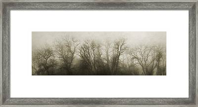 The Secrets Of The Trees Framed Print by Scott Norris