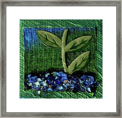 The Seedling Framed Print by Donna Blackhall
