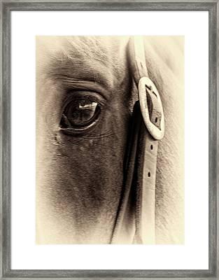 The Seer Framed Print by Winnie Chrzanowski