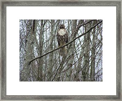 The Sentinel Framed Print by Laurie Kidd