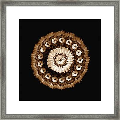 The Sepia Feather And Beadwork Of Flower Framed Print by Jacqueline Migell