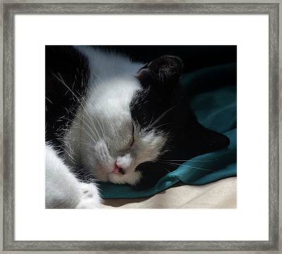The Serious Business Of Sleep Framed Print