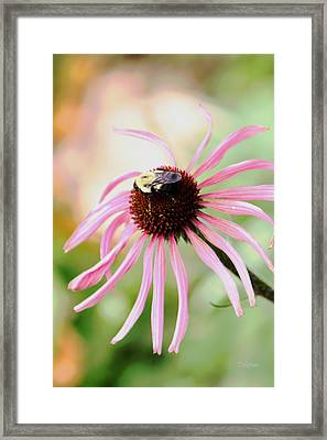 Framed Print featuring the photograph The Sharing Game by Deborah  Crew-Johnson