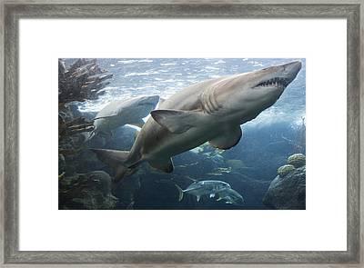 The Shark King Framed Print by Tim Michael Ufferman