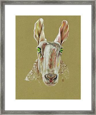 The Sheep Framed Print