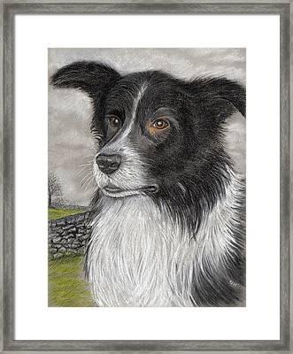 The Sheepdog Framed Print