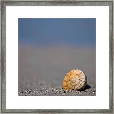 The Shell Framed Print by Ryan Heffron