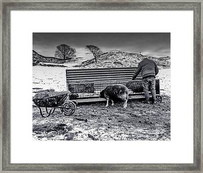 Framed Print featuring the photograph The Shepherd by Keith Elliott