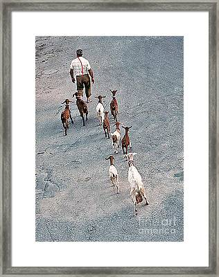 The Shepherd Framed Print by Mary Attard