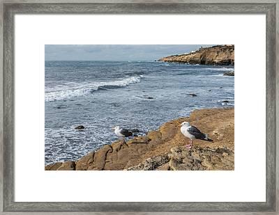 The Shore Patrol - California Coast Seagull Photograph Framed Print by Duane Miller