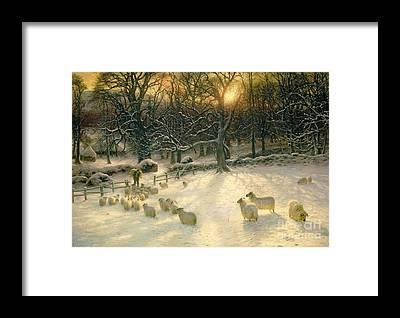 Sheep Framed Prints