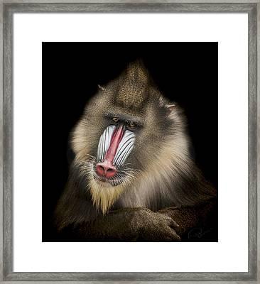 The Shrink Framed Print