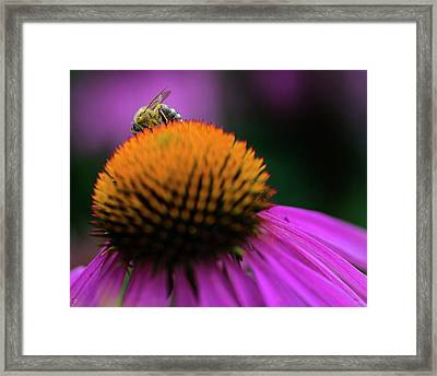 The Shy Bee Framed Print