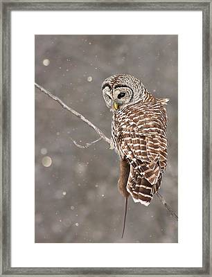 The Silent Hunter Framed Print