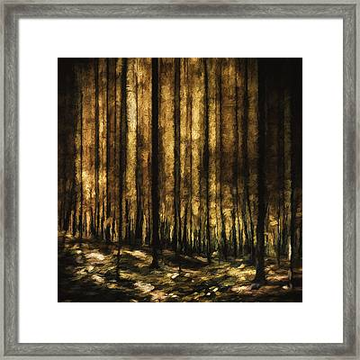The Silent Woods Framed Print by Scott Norris