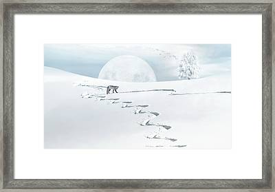 The Silver Fox Framed Print
