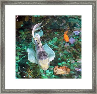 The Silver Streak Framed Print by Deb Hayes