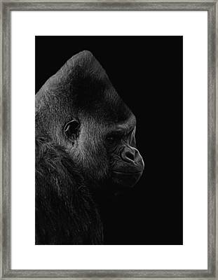The Silverback Gorilla Bw Framed Print