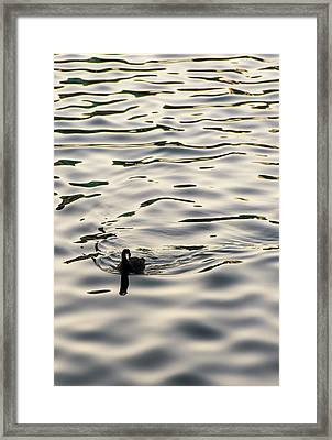 The Simple Life Framed Print by Alex Lapidus
