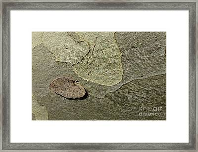 The Skin Of Tree Framed Print by Jean Bernard Roussilhe