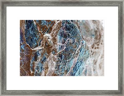 The Sleeper Framed Print by Danica Radman