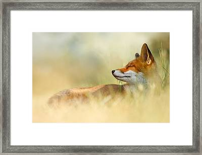 The Sleeping Beauty - Wild Red Fox Framed Print by Roeselien Raimond