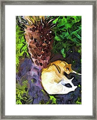The Sleeping Cat And The Dead Tree Fern Framed Print