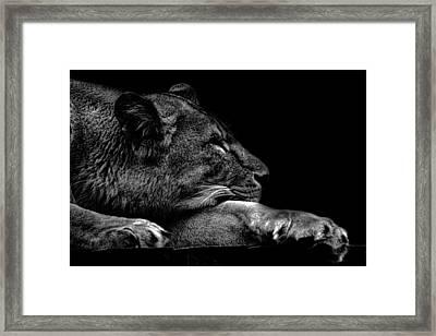 The Sleeping Lion Framed Print