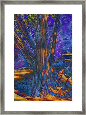 The Sleeping Tree Framed Print by Wendy J St Christopher