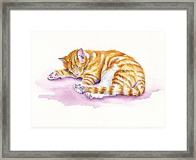 The Sleepy Kitten Framed Print