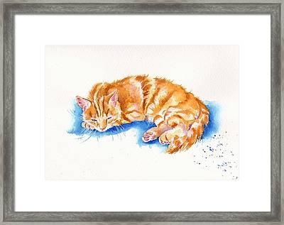 The Sleepy Marmalade Cat Framed Print by Debra Hall