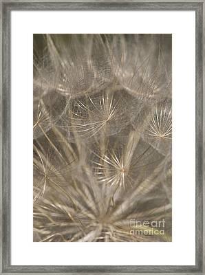 The Slightest Breeze... Framed Print