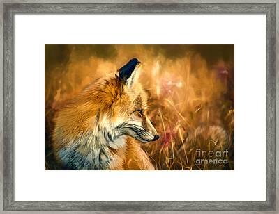 The Sly Fox Framed Print