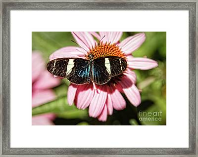 The Small Blue Grecian Framed Print by Robert Bales
