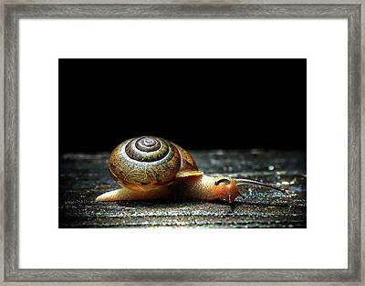 Framed Print featuring the photograph The Small Things by Jessica Brawley