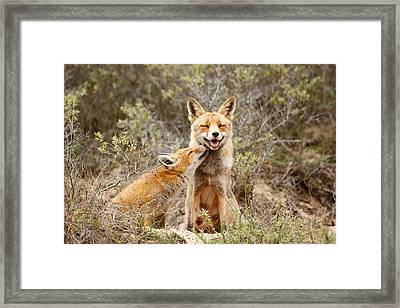 The Smiling Vixen And The Happy Kit Framed Print by Roeselien Raimond