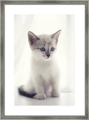 Framed Print featuring the photograph The Snow Prince by Amy Tyler