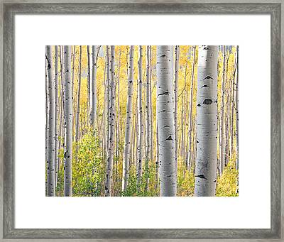 The Softer Side Of Fall Framed Print by The Forests Edge Photography - Diane Sandoval