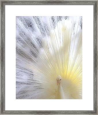 The Softer Side Of White Framed Print
