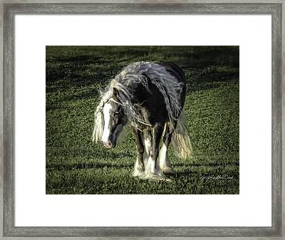The Softest Mare Framed Print by Terry Kirkland Cook