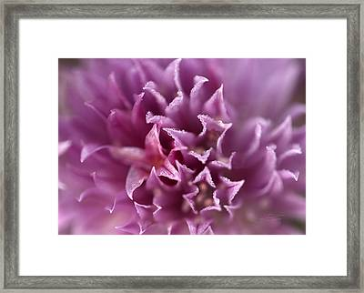 The Softest Touch Framed Print