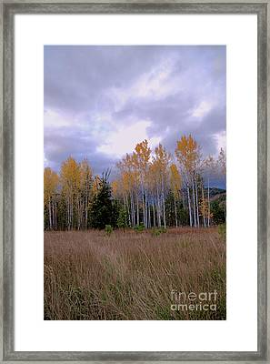 The  Song Of The Aspens 2 Framed Print