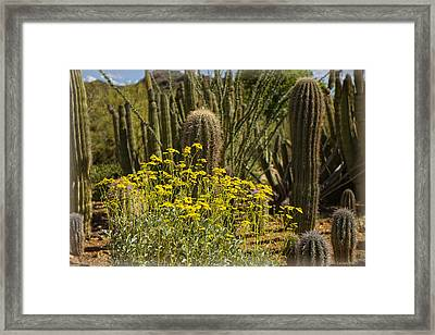 The Song Of The Sonoran Desert Framed Print