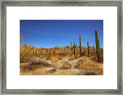 The Sonoran Desert Framed Print by Robert Bales