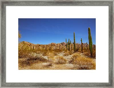 The Sonoran Desert Framed Print by Robert Bales