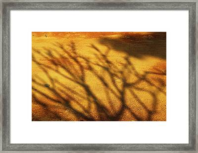 The Soundlessness Of Nature Framed Print by Prakash Ghai