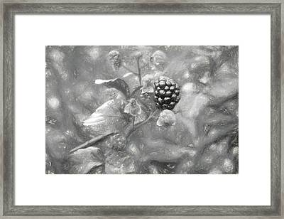 The South Georgia Blackberry In Black And White Framed Print by JC Findley