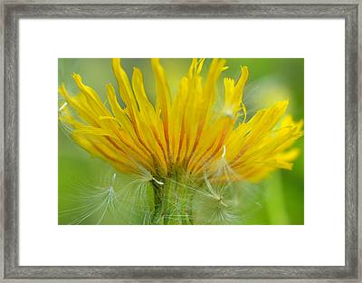 The Sow And Silk Framed Print